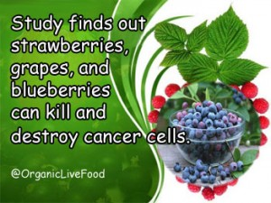 Blueberries for cancer